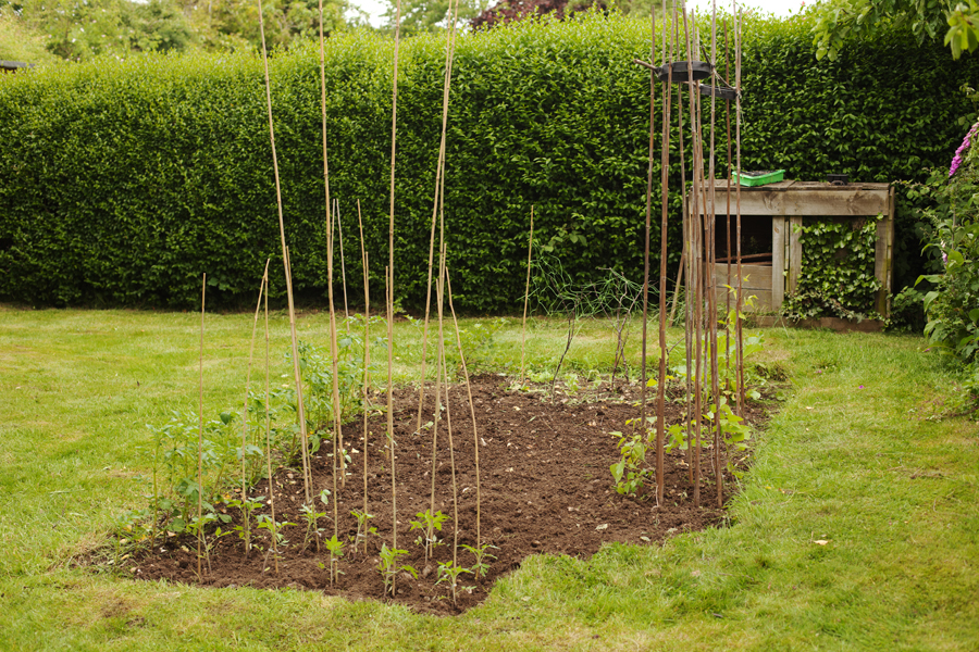 The tidied-up plot with newly planted tomatoes at the front