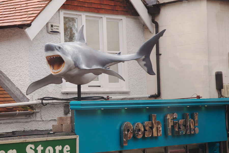 A shark spotted from the bus