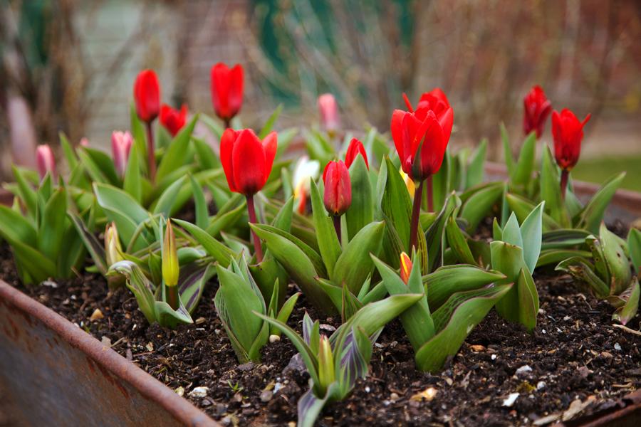 More spring colour