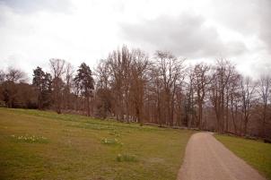 Heading towards the woodland