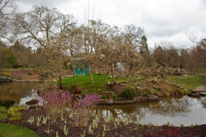 Finally signs of spring in the Water Garden