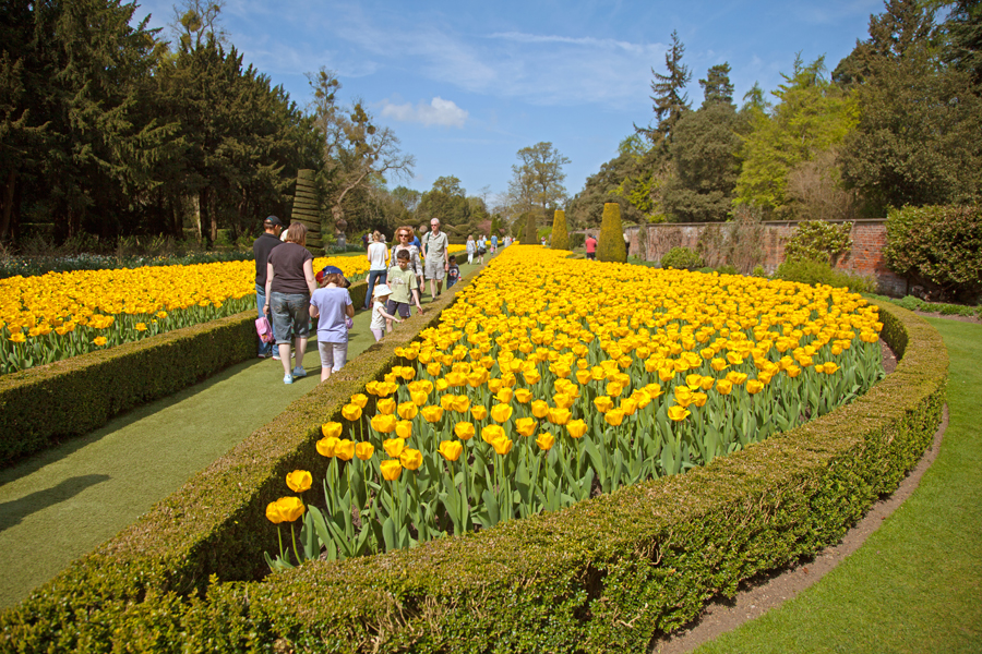 Tulips in the Long Garden