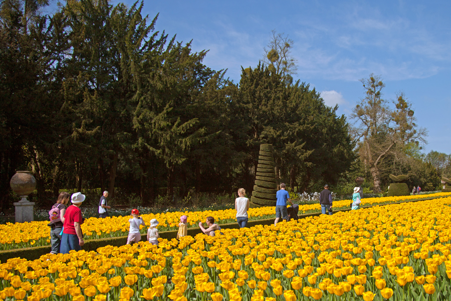 Walking through the tulips