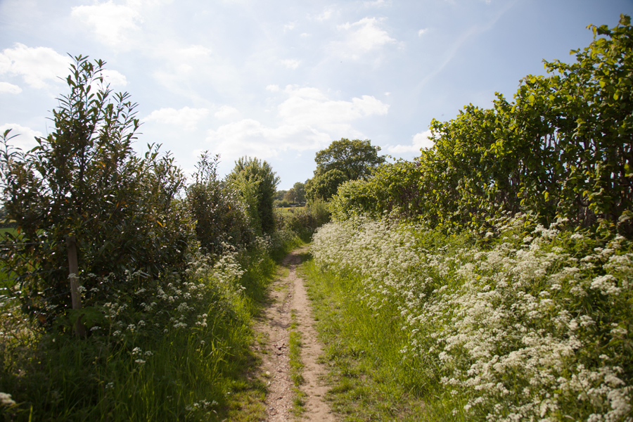 Spring blossom in the hedgerows