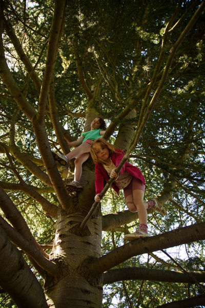 Rebekah and Holly climbing a cedar