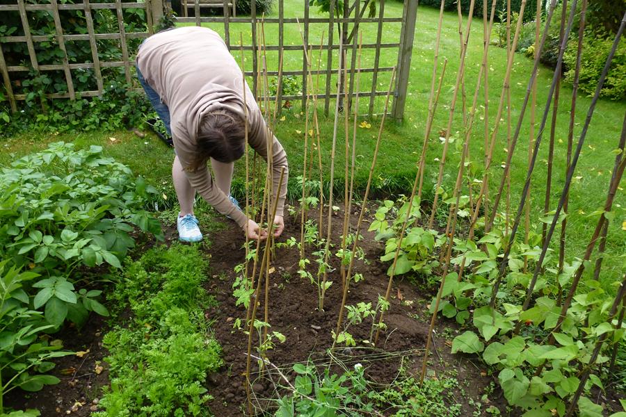 Sarah adding canes