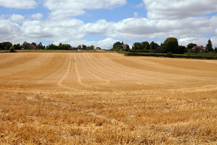 The recently harvested field