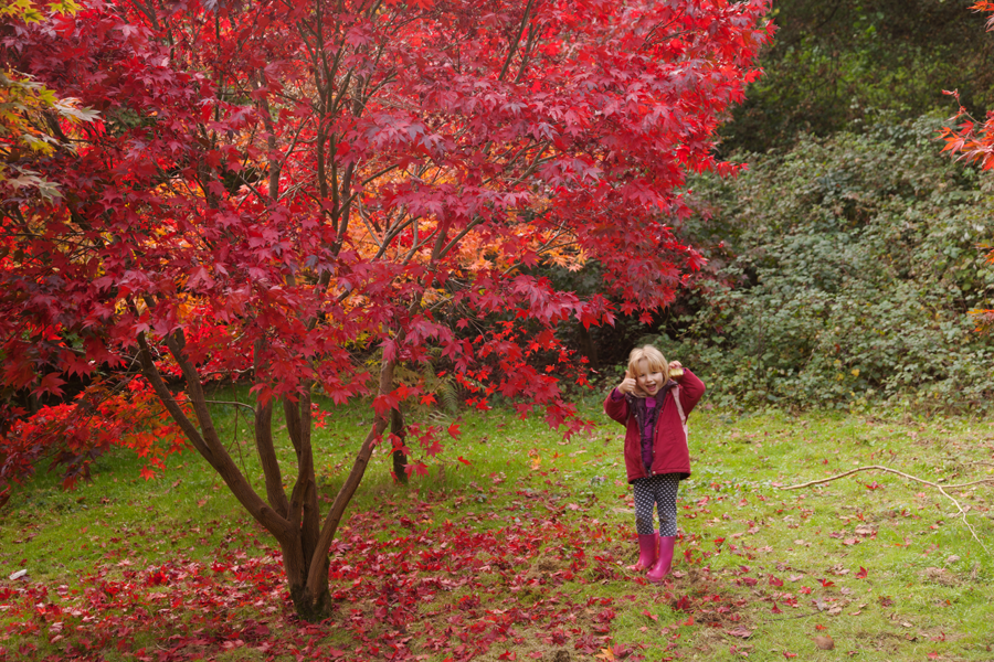 Emily by an acer, with an apple