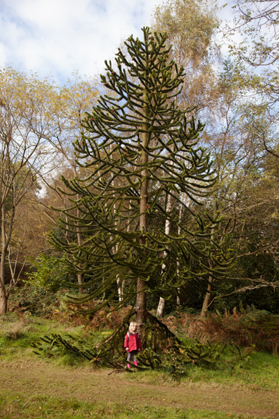 Emily by a monkey puzzle