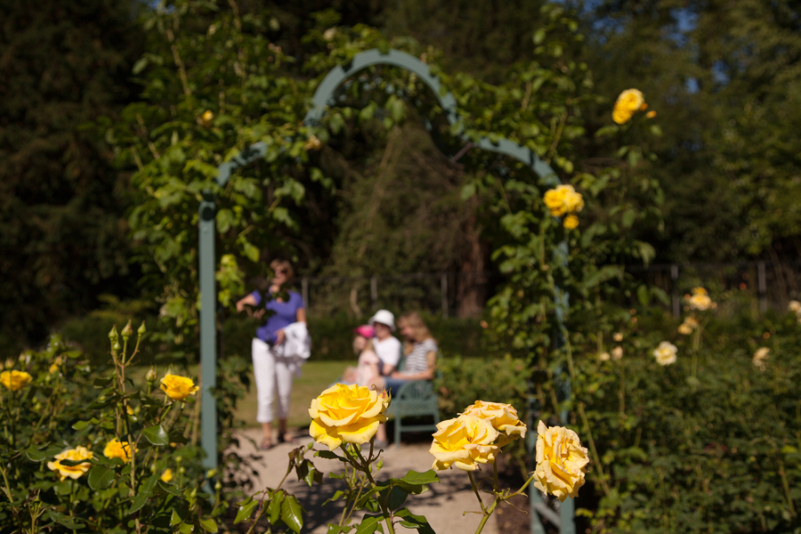 Family framed in the Rose Garden
